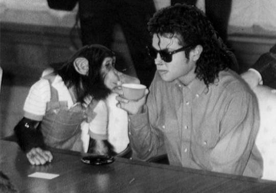 Michael Jackson Chimp