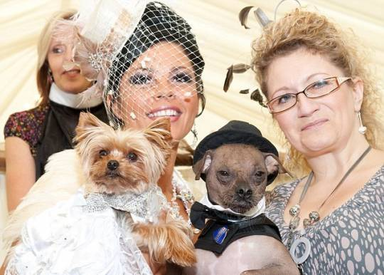 Britains most expensive pet wedding