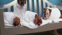 Luxurious spa for dogs