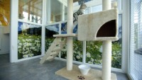 Longcroft Luxury Cat Hotel offers the best in comfort and style for your pets