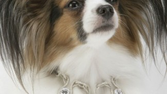 Pampering your Pooch: The Most Expensive Dog Collar in the World