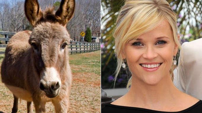 Reese Witherspoon owns two donkeys