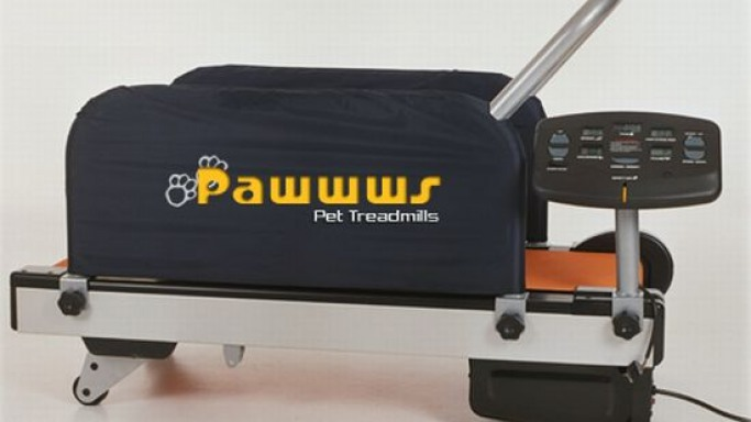 Pawwws Pet Treadmill for exercising dogs