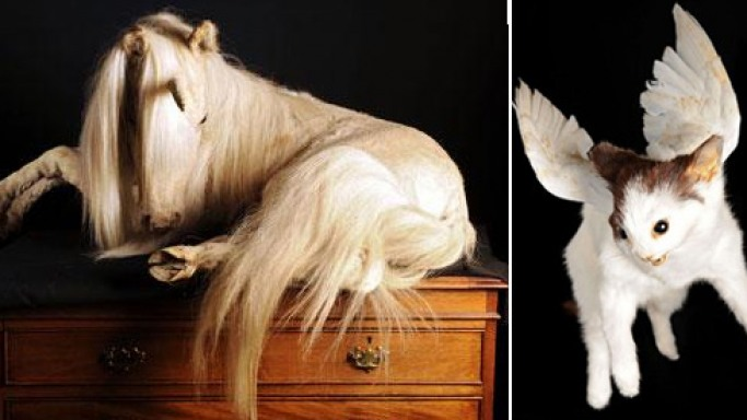 Museum of taxidermy puts up rare Victorian still life collection for auction