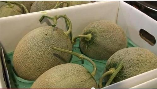 A pair of Japanese Cantaloupe melons manage to gather $15,730 at auction